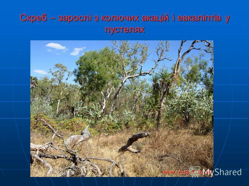 Рослинний світ Панівною рослиною Австралії є евкаліпт. Їх нараховується близько 600 видів, окремі з них дуже великі (до 100 м заввишки і 10 м завдовжки), інші - низькорослі, у вигляді чагарників. Голубувато-сіре листя евкаліптів надає лісам трохи сум