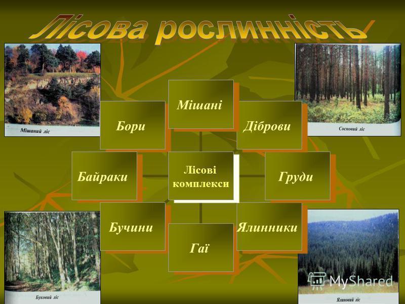 Лісові комплекси МішаніДібровиГрудиЯлинникиГаїБучиниБайракиБори