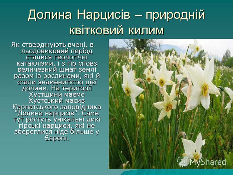 Долина Нарцисів – природній квітковий килим Як стверджують вчені, в льодовиковий період сталися геологічні катаклізми, і з гір сповз величезний шмат землі разом із рослинами, які й стали знаменитістю цієї долини. На території Хустщини маємо Хустський