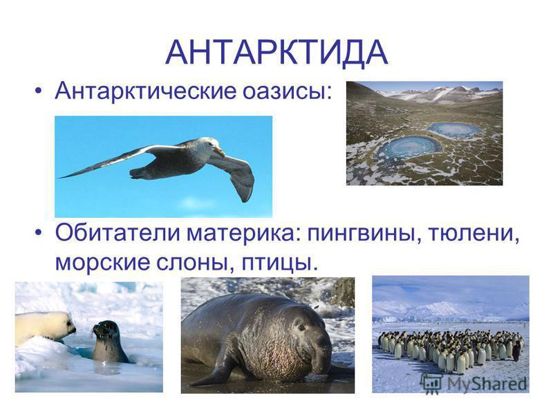 АНТАРКТИДА Антарктические оазисы: Обитатели материка: пингвины, тюлени, морские слоны, птицы.