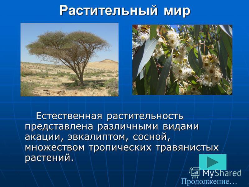 Растительный мир Естественная растительность представлена различными видами акации, эвкалиптом, сосной, множеством тропических травянистых растений. Естественная растительность представлена различными видами акации, эвкалиптом, сосной, множеством тро