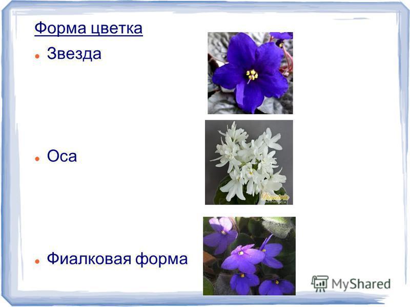 Форма цветка Звезда Оса Фиалковая форма