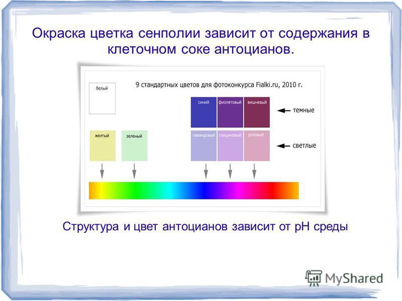 Окраска цветка сенполии зависит от содержания в клеточном соке антоцианов. Структура и цвет антоцианов зависит от pH среды