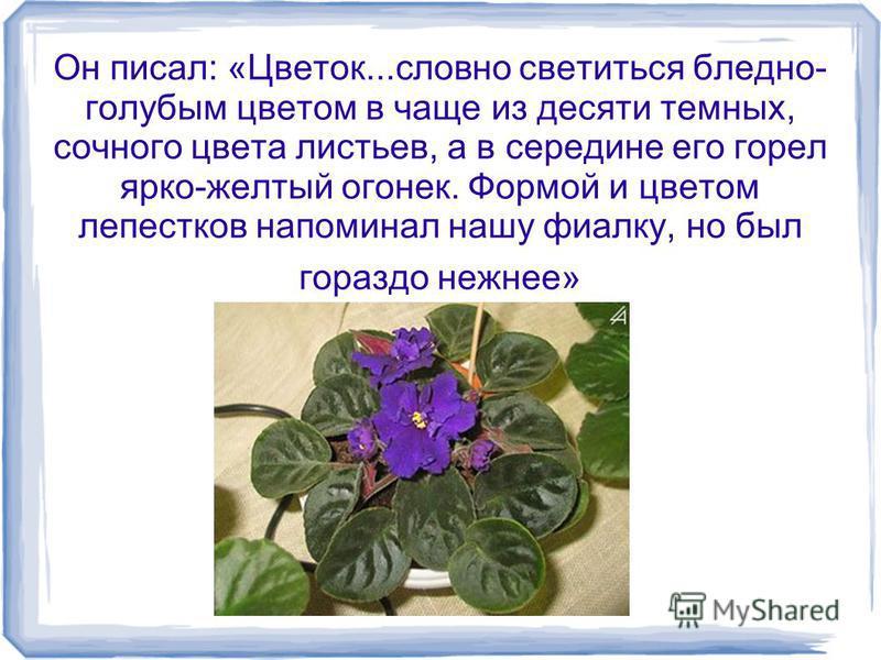 Он писал: «Цветок...словно светиться бледно- голубым цветом в чаще из десяти темных, сочного цвета листьев, а в середине его горел ярко-желтый огонек. Формой и цветом лепестков напоминал нашу фиалку, но был гораздо нежнее»