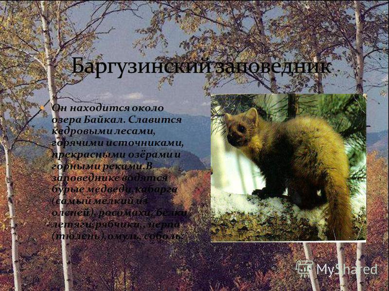 Он находится около озера Байкал. Славится кедровыми лесами, горячими источниками, прекрасными озёрами и горными реками.В заповеднике водятся бурые медведи,кабарга (самый мелкий из оленей), росомахи, белки- летяги,рябчики,, нерпа (тюлень),омуль, собол