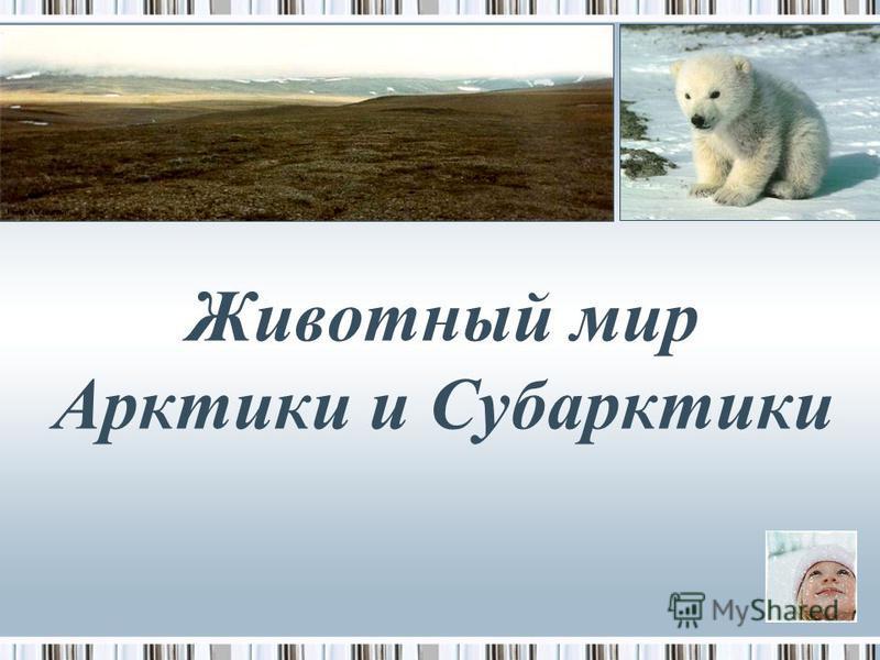 Животный мир Арктики и Субарктики