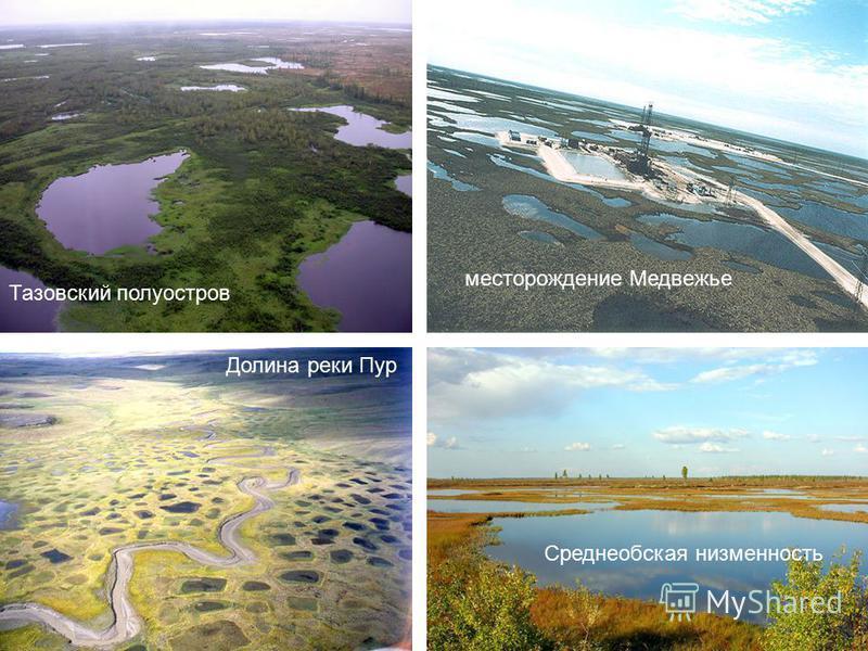 Долина реки Пур Среднеобская низменность Тазовский полуостров месторождение Медвежье