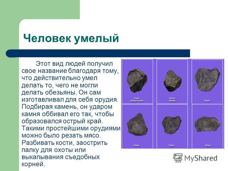Появление человека умелого Около 2 млн. лет назад, на Земле появились первые люди, которые видимо произошли от австралопитеков. Это особый вид, который учёные назвали «человек умелый».