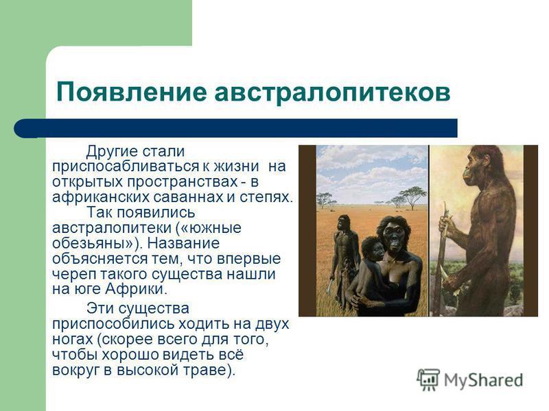 Разветвление вида дриопитеков Одни из дриопитеков остались в лесах, от них произошли современные виды обезьян: 1-макака, 2 и 3-шимпанзе, 4-горилла