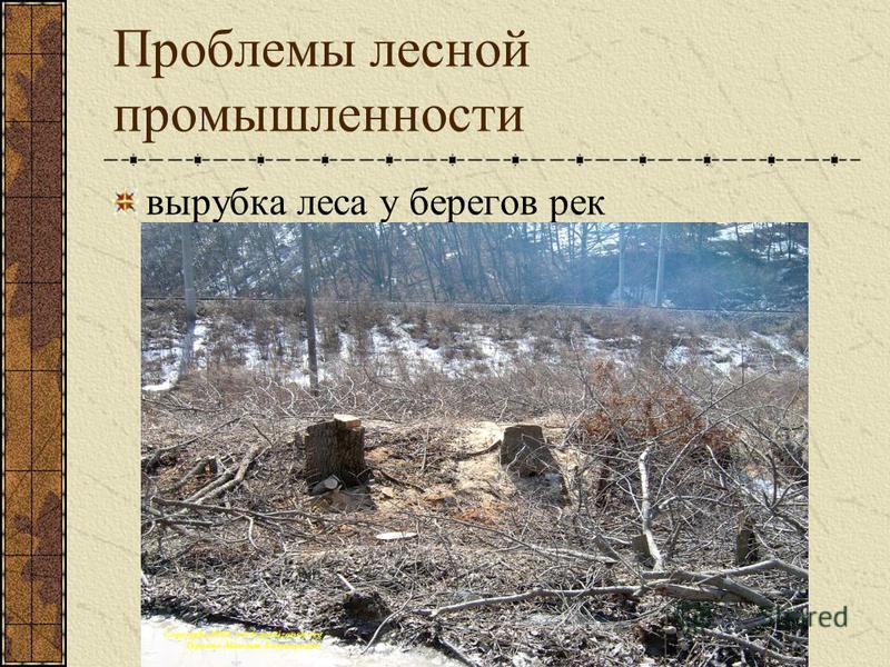 Проблемы лесной промышленности вырубка леса у берегов рек