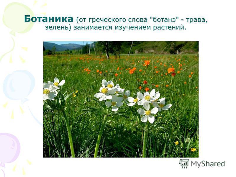 Ботаника (от греческого слова ботанэ - трава, зелень) занимается изучением растений.