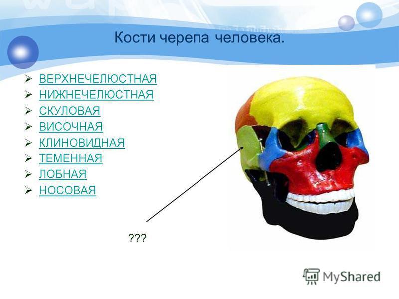 Кости черепа человека. ВЕРХНЕЧЕЛЮСТНАЯ НИЖНЕЧЕЛЮСТНАЯ СКУЛОВАЯ ВИСОЧНАЯ КЛИНОВИДНАЯ ТЕМЕННАЯ ЛОБНАЯ НОСОВАЯ ???