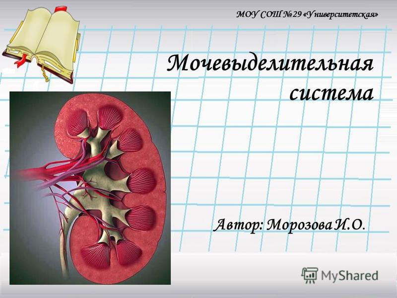 Мочевыделительная система Автор: Морозова И.О. МОУ СОШ 29 «Университетская»