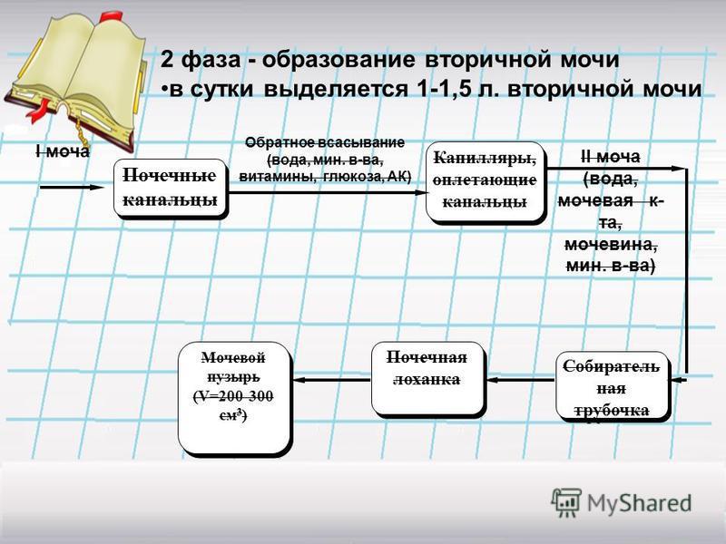 2 фаза - образование вторичной мочи в сутки выделяется 1-1,5 л. вторичной мочи Почечные канальцы Почечные канальцы Капилляры, оплетающие канальцы I моча Обратное всасывание (вода, мин. в-ва, витамины, глюкоза, АК) II моча (вода, мочевая к- та, мочеви
