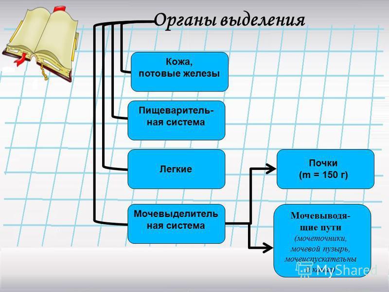 Органы выделения Почки (m = 150 г) Мочевыводя- щие пути (мочеточники, мочевой пузырь, мочеиспускательный канал) Кожа, потовые железы Пищеваритель- ная система Легкие Мочевыделитель ная система