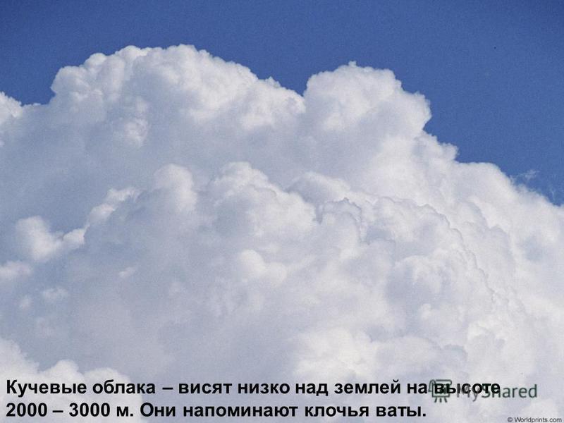 Кучевые облака – висят низко над землей на высоте 2000 – 3000 м. Они напоминают клочья ваты.