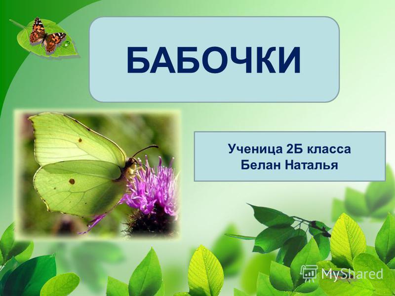 БАБОЧКИ Ученица 2Б класса Белан Наталья