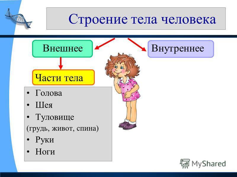 Строение тела человека Внешнее Внутреннее Голова Шея Туловище (грудь, живот, спина) Руки Ноги Части тела