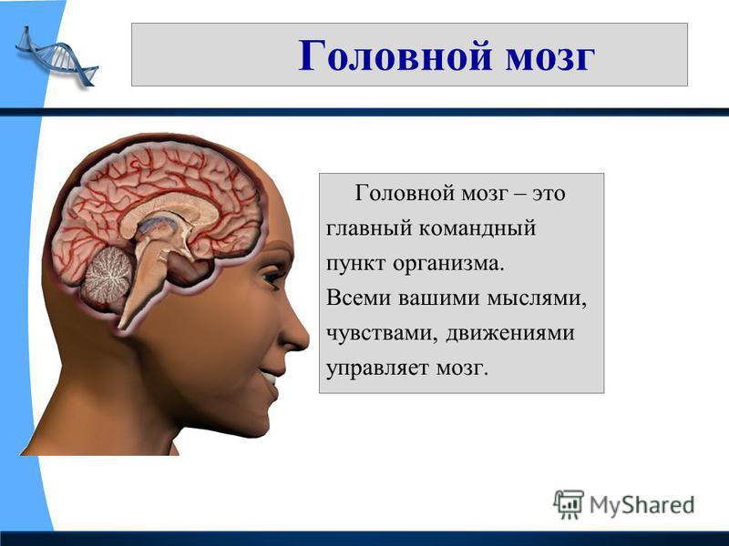Головной мозг Головной мозг – это главный командный пункт организма. Всеми вашими мыслями, чувствами, движениями управляет мозг.
