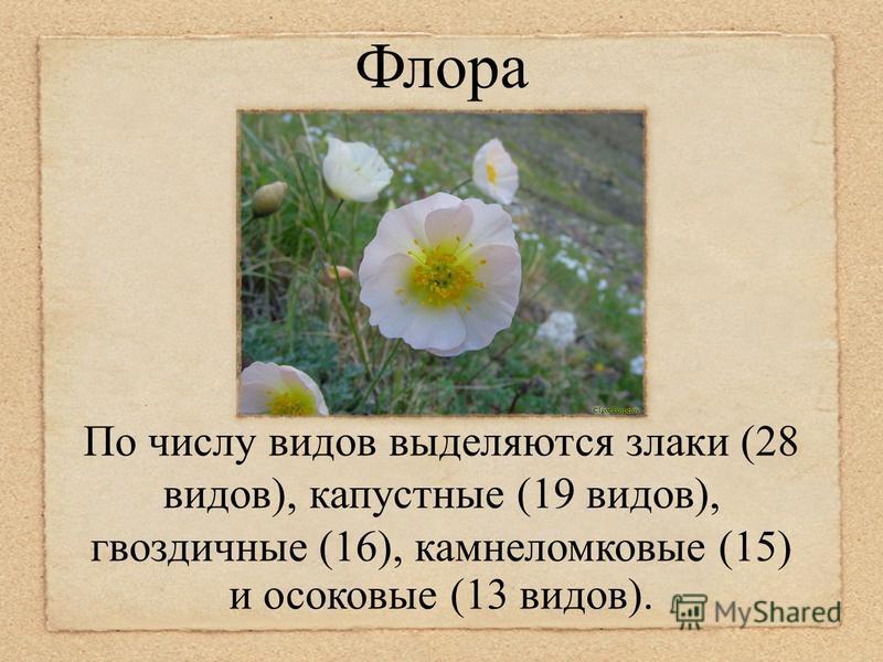 Флора По числу видов выделяются злаки (28 видов), капустные (19 видов), гвоздичные (16), камнеломковые (15) и осоковые (13 видов).