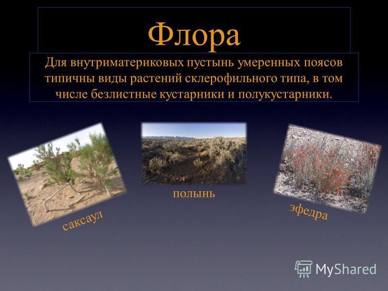 Флора Для внутриматериковых пустынь умеренных поясов типичны виды растений склерофильного типа, в том числе безлистные кустарники и полукустарники. саксаул полынь эфедра