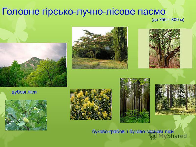 Головне гірсько-лучно-лісове пасмо (до 750 – 800 м) дубові ліси буково-грабові і буково-соснові ліси.