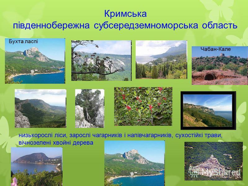 Кримська південнобережна субсередземноморська область низькорослі ліси, зарослі чагарників і напівчагарників, сухостійкі трави, вічнозелені хвойні дерева Чабан-Кале Бухта ласпі