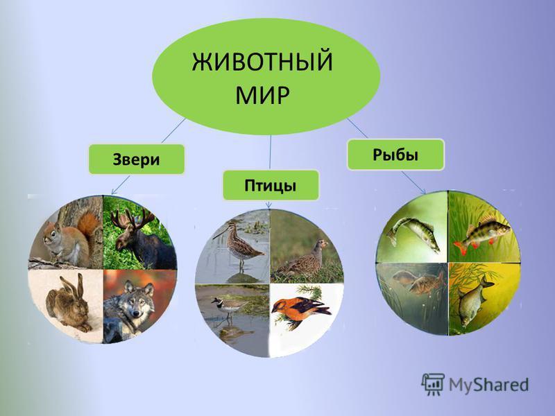 ЖИВОТНЫЙ МИР Звери Птицы Рыбы