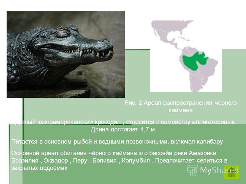 Крупный южноамериканский крокодил, относится к семейству аллигаторовых. Длина достигает 4,7 м Питается в основном рыбой и водными позвоночными, включая капибару Основной ареал обитания чёрного каймана это бассейн реки Амазонки : Бразилия, Эквадор, Пе