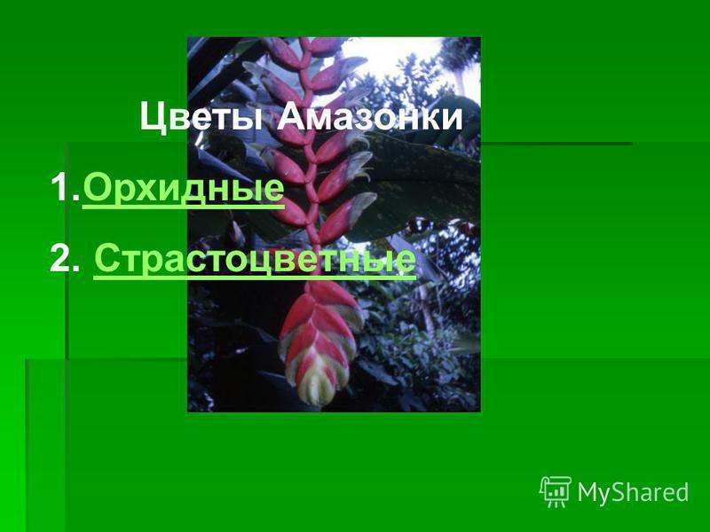 Цветы Амазонки 1. Орхидные Орхидные 2. Страстоцветные Страстоцветные