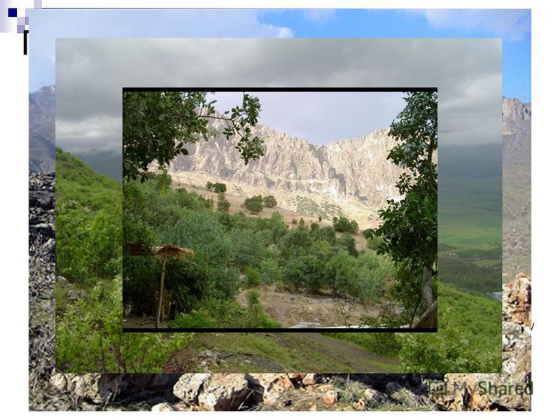 Природные условия и ресурсы Иракский Курдистан отличает горный рельеф и обилие рек и озёр. Самая высокая гора Чик Дар (3611 м). Леса (например, в провинциях Эрбиль и Дахук 770 га); курдским правительством проводятся интенсивные лесопосадки. Климат Ир