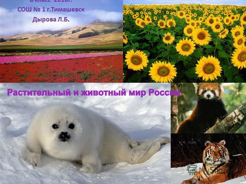 8 класс 2010 г. СОШ 1 г.Тимашевск Дырова Л.Б.