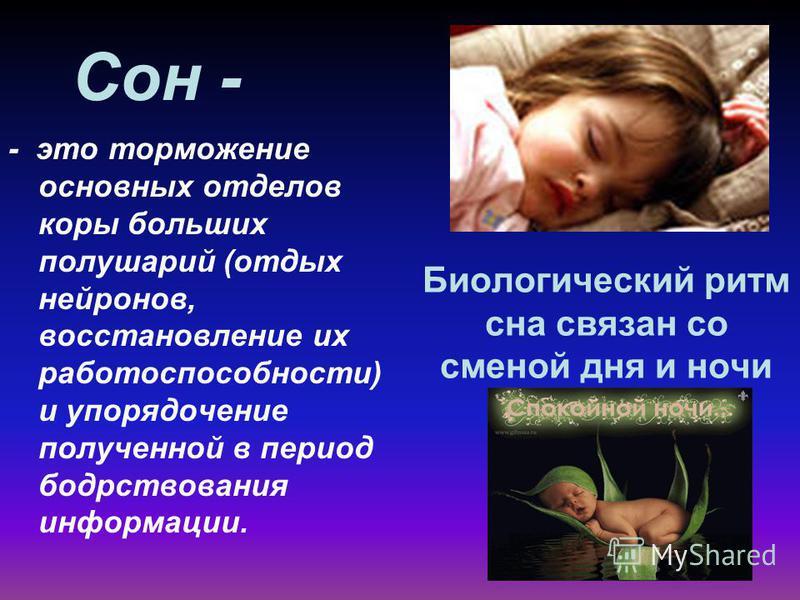 Сон - - это торможение основных отделов коры больших полушарий (отдых нейронов, восстановление их работоспособности) и упорядочение полученной в период бодрствования информации. Биологический ритм сна связан со сменой дня и ночи