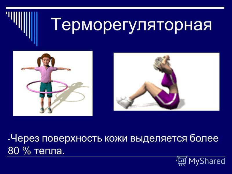Терморегуляторная - Через поверхность кожи выделяется более 80 % тепла.