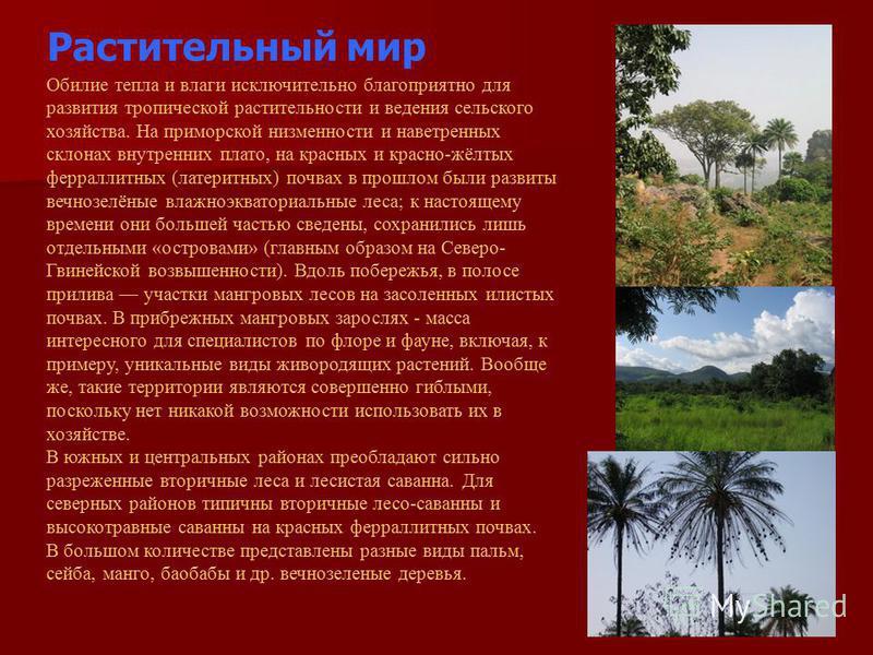Растительный мир Обилие тепла и влаги исключительно благоприятно для развития тропической растительности и ведения сельского хозяйства. На приморской низменности и наветренных склонах внутренних плато, на красных и красно-жёлтых ферраллитных (латерит
