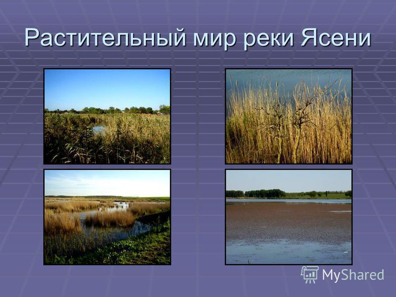 Растительный мир реки Ясени