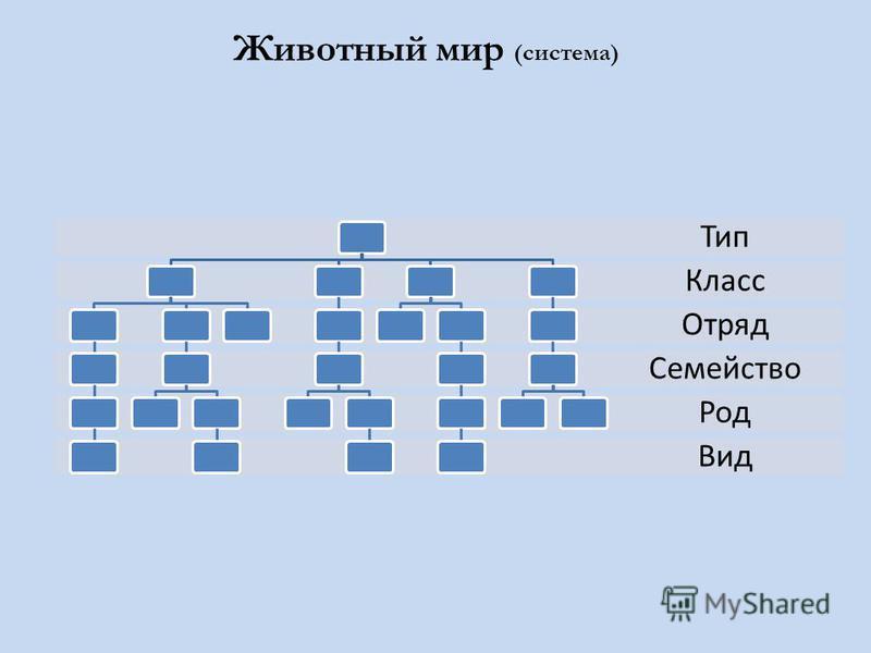 Животный мир (система) Вид Род Семейство Отряд Класс Тип