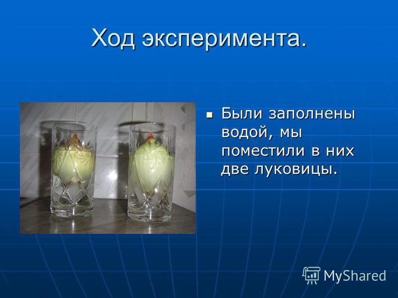 Ход эксперимента. Были заполнены водой, мы поместили в них две луковицы. Были заполнены водой, мы поместили в них две луковицы.