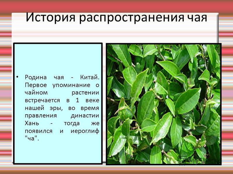 История распространения чая Родина чая - Китай. Первое упоминание о чайном растении встречается в 1 веке нашей эры, во время правления династии Хань - тогда же появился и иероглиф ча.