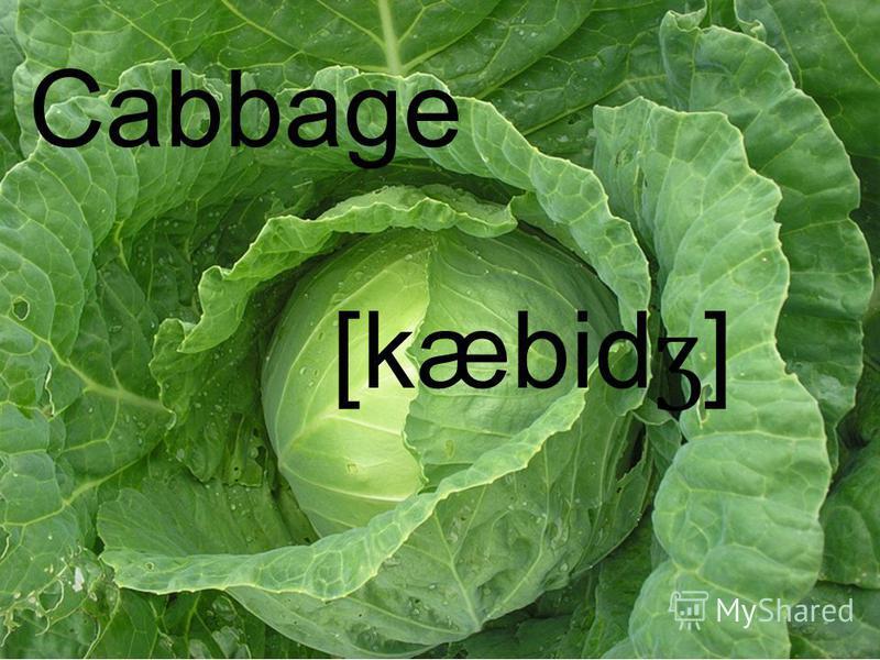 [kæbid ʒ ] Cabbage