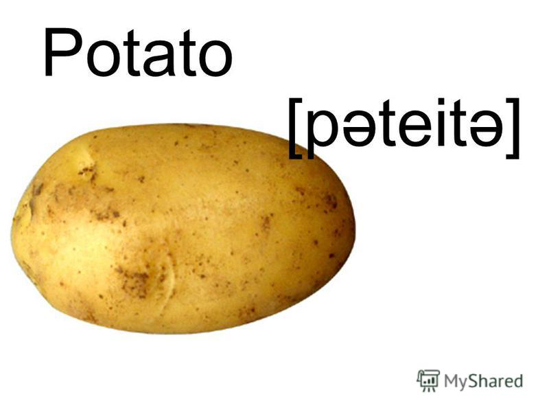 Potato [pəteitə]