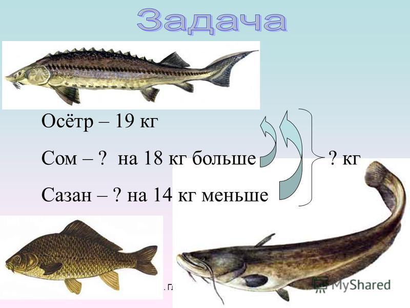 И.А. Глушкова, Т.Н. Полякова Осётр – 19 кг Сом – ? на 18 кг больше? кг Сазан – ? на 14 кг меньше