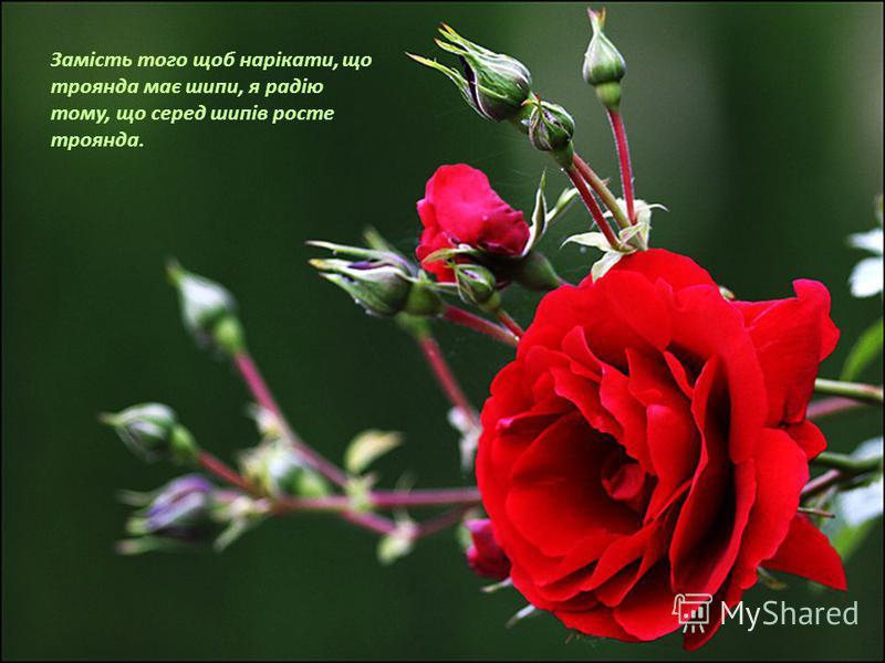 Замість того щоб нарікати, що троянда має шипи, я радію тому, що серед шипів росте троянда.