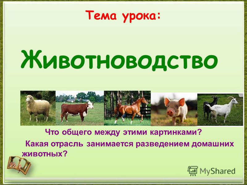 Тема урока: Что общего между этими картинками? Какая отрасль занимается разведением домашних животных? Животноводство