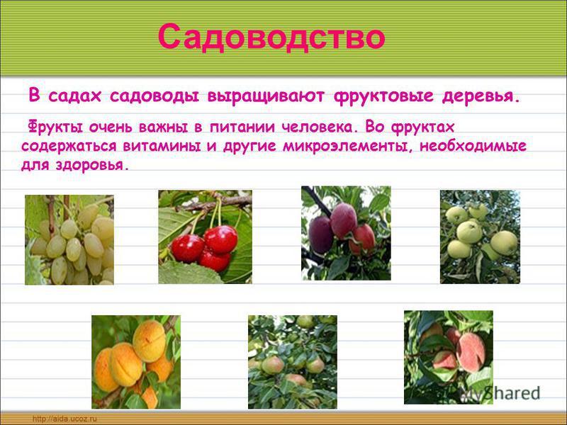 В садах садоводы выращивают фруктовые деревья. Фрукты очень важны в питании человека. Во фруктах содержаться витамины и другие микроэлементы, необходимые для здоровья. Садоводство