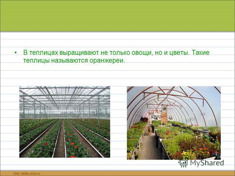 В теплицах выращивают не только овощи, но и цветы. Такие теплицы называются оранжереи.
