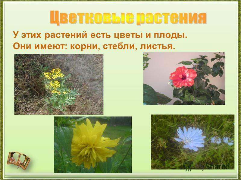 У этих растений есть цветы и плоды. Они имеют: корни, стебли, листья.