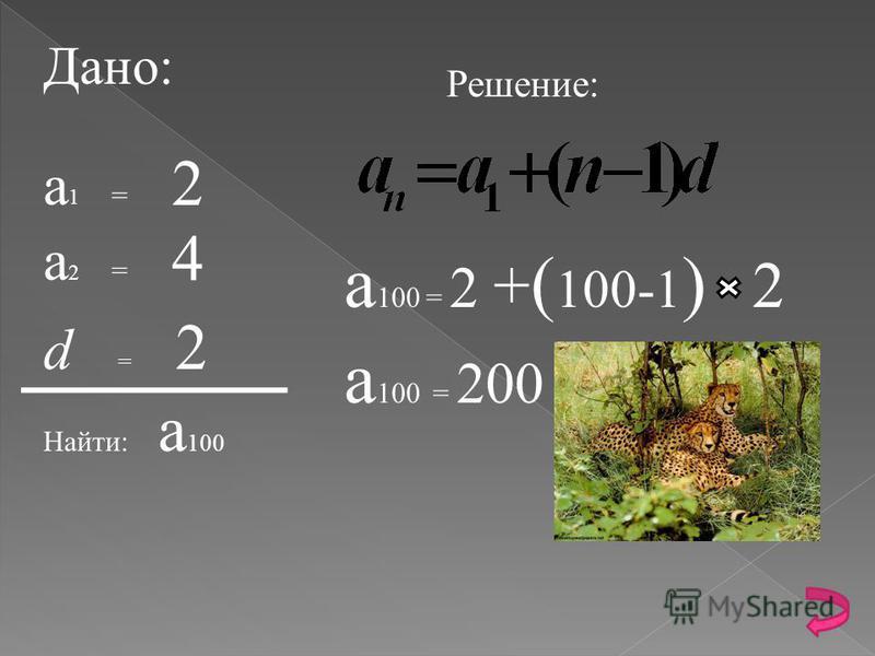В первый год работы заповедника, численность гепардов равнялось двум. 2 На следующий год численность гепардов равнялась 4 4 Сколько гепардов Будет через 100 лет? И каждый последующий год численность возрастала на 2 гепарда.