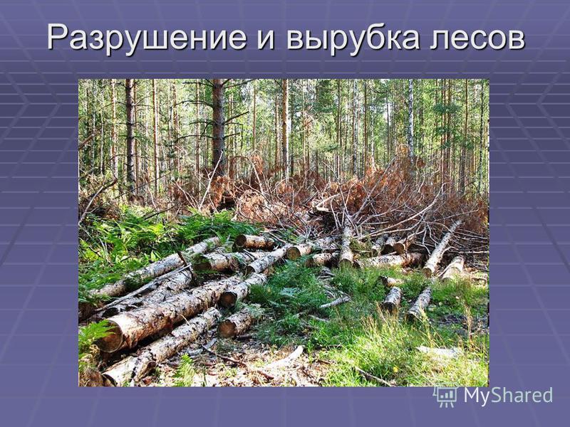 Разрушение и вырубка лесов