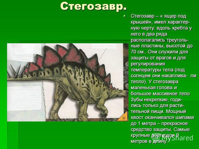Стегозавр. Стегозавр. Стегозавр – « ящер под крышей», имел характерную черту: вдоль хребта у него в два ряда располагалишь треугольные пластины, высотой до 70 см.. Они служили для защиты от врагов и для регулирования температуры тела (под солнцем они
